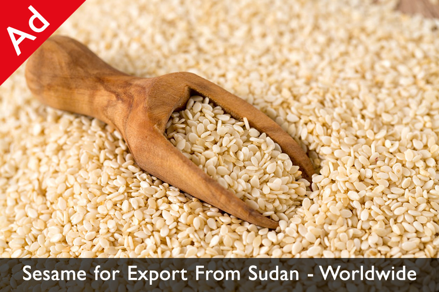 Sesame for Export from Sudan